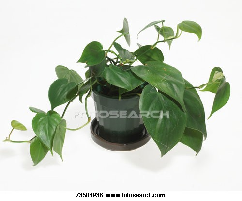 How to identify types of house plants ehow uk - Home plants types ...