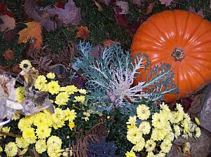 How To Prepare Flower Beds For Winter Garden Guides
