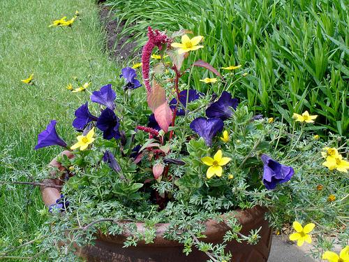 Комнатные растения фото и названия