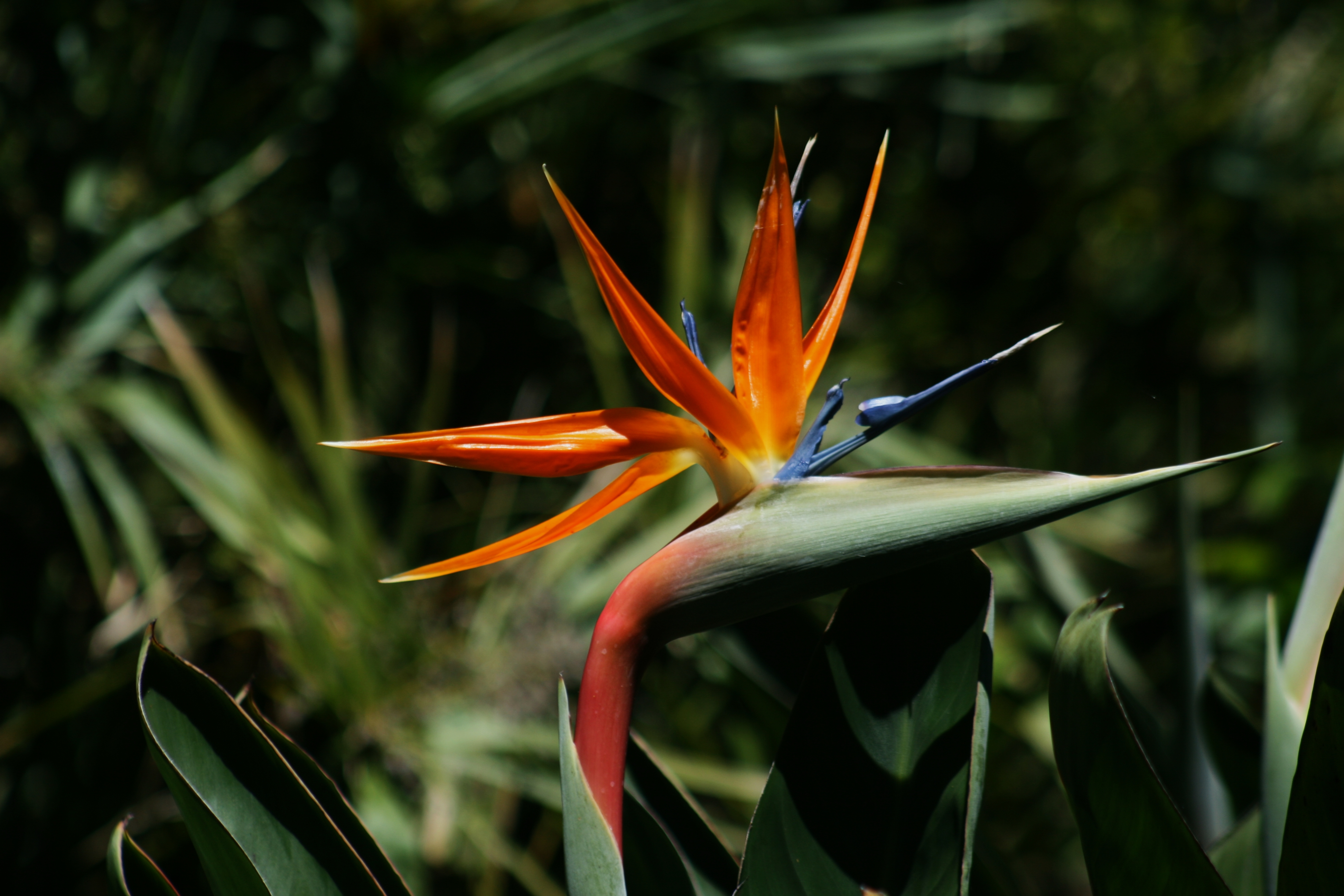 How to Transplant Bird of Paradise | Garden Guides