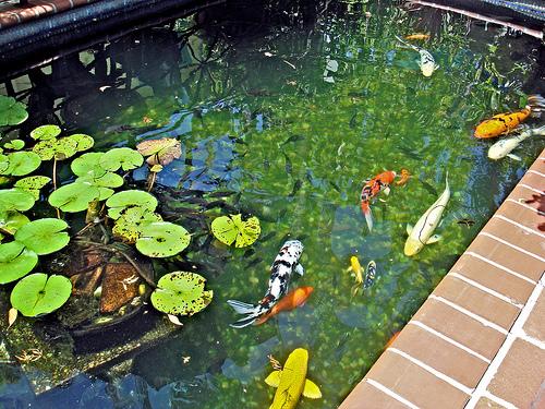 ultraviolet lights can help keep your pond crystal clear image by. Black Bedroom Furniture Sets. Home Design Ideas