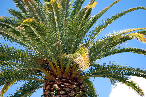 Types of indoor palm plants garden guides - A gardener is planting two types of trees ...