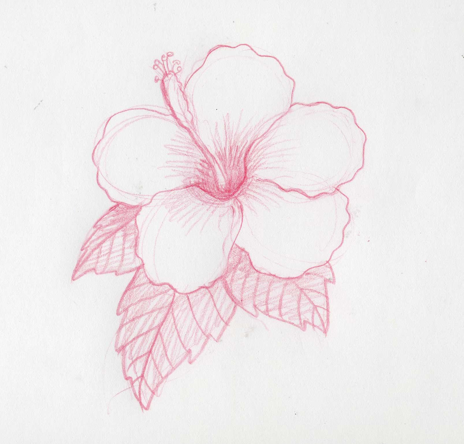 Como Dibujar Flores Related Keywords amp Suggestions