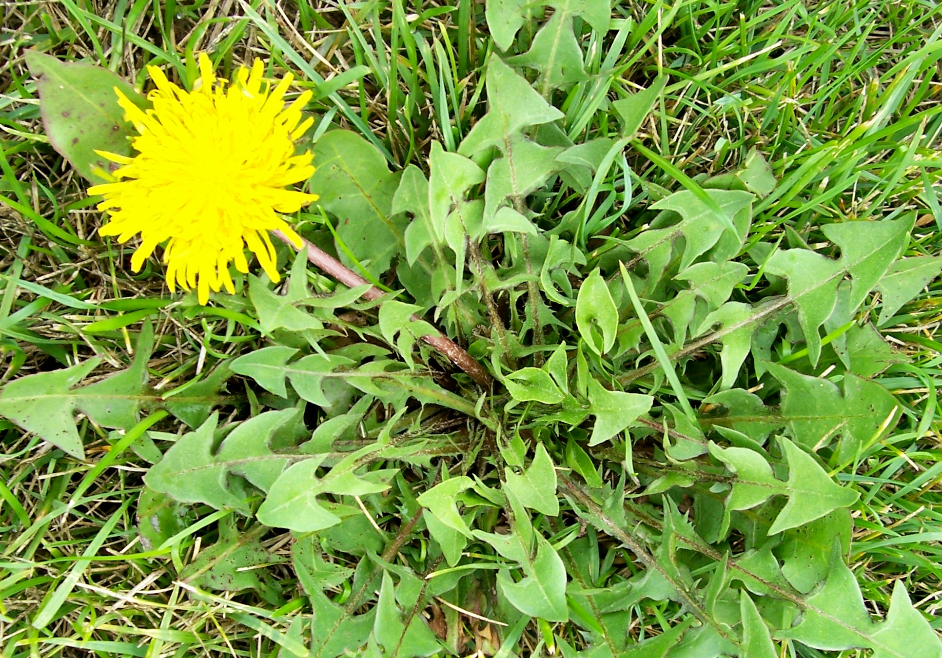 How To Rid Lawn Of Weeds Garden Guides