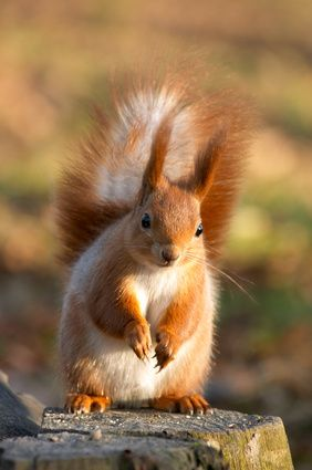 How To Keep Squirrels Out Of Flower Pots Ehow Uk