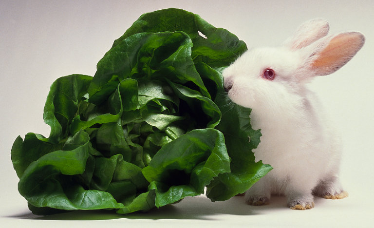 How to deter rabbits from a garden ehow uk - How to deter rabbits from garden ...