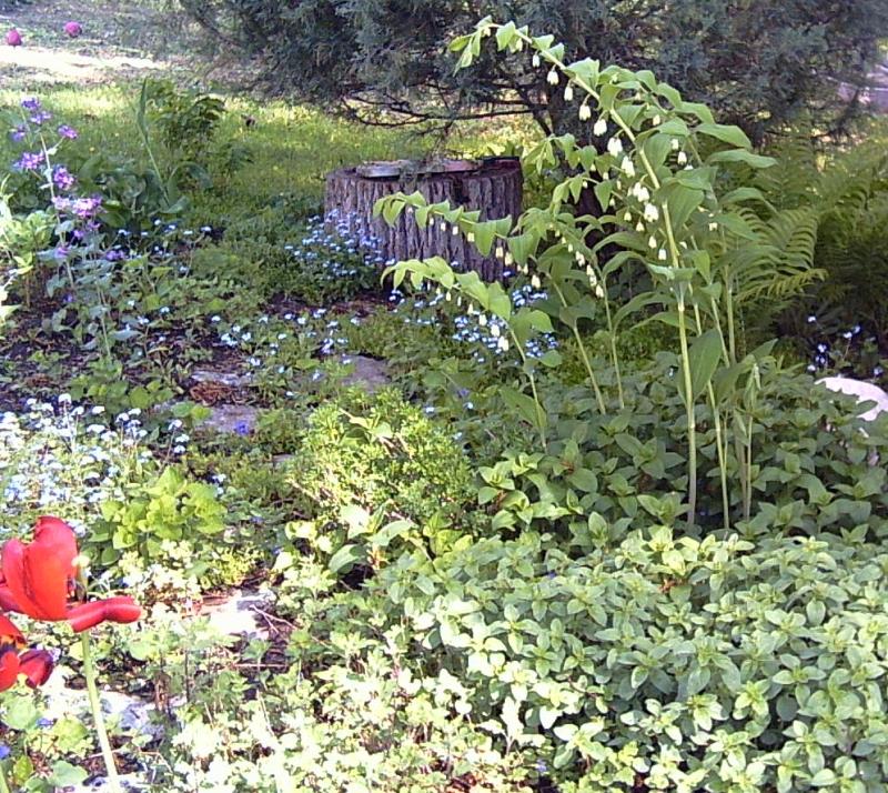 Shade garden plans photograph - Free shade garden design plans ...