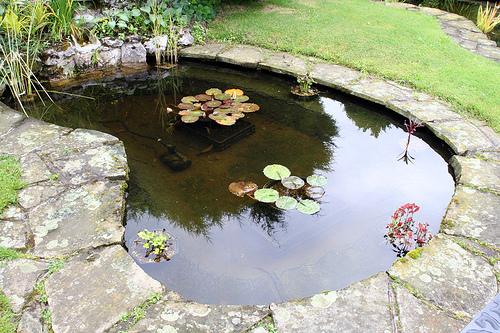 About garden ponds garden guides for Pond in a garden