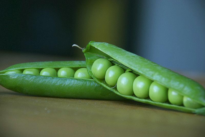 How Do Pea Pods Grow Garden Guides